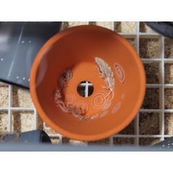 Snail-Farm-in-a-Box